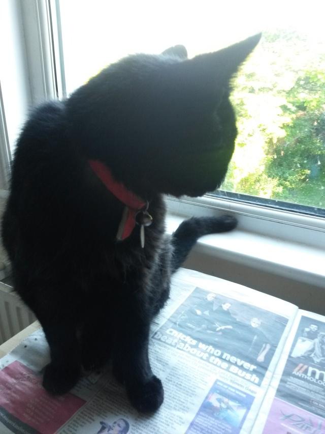 cat on news.jpg